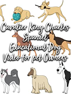 Cavalier King Charles Spaniel Educational Dog Video for pet Owners