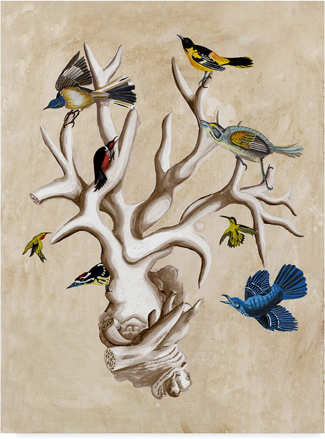 Trademark Fine Art WAG00873C1419GG The Ornithologists Dream Ii Art by Naomi Mccavitt, 14x19, 14x19, Multicolor