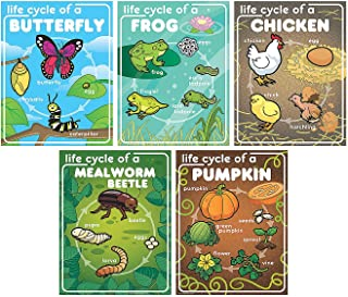 Fun Express Life Cycle Posters - 5 Pieces - Educational and Learning Activities for Kids