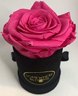 Somewhere Blooms Eternity Rose, Suede Gift Box, Preserved Fresh Flower, Long Lasting, Perfect Luxury Gift for Mother's Day, Birthday, Anniversary (Fuschia, Black Box)