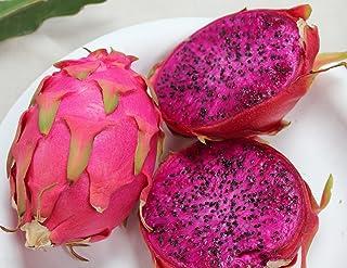 20 PURPLE DRAGON FRUIT (Pitaya / Pitahaya / Strawberry Pear