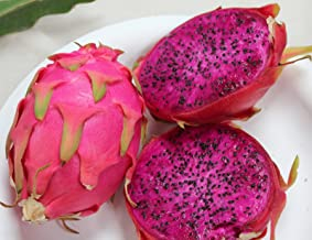 20 PURPLE DRAGON FRUIT (Pitaya / Pitahaya / Strawberry Pear) Hylocereus Undatus Cactus Seeds by Seedville