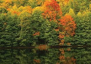 جيه بي لندن MDXL91073P أشجار الخريف غير المنسوجة مسبقًا، غابة البحيرة جدار كاملة ، 30.48 سم عرض بواسطة 8.5 سم ارتفاع