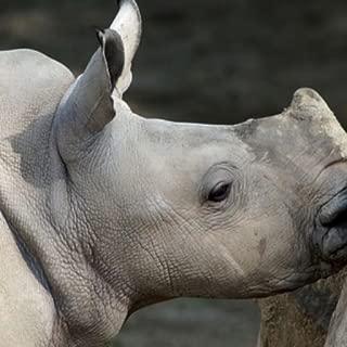 rhino images hd