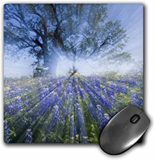3dRose Texas Bluebonnet Flowers in Bloom, Central Texas, USA - Mouse Pad, 8 by 8 inches (mp_146912_1)