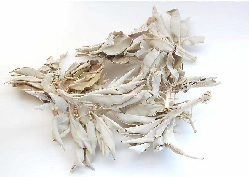 タンパク質ピカソ修士号セドナのヒーラーの推奨品、ワイルド(野生)ホワイトセージ(無農薬栽培)クラスター45g