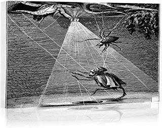 Antique jeffcyb of humanised Cricket and Insects Canvas Art Wall Decor,051387 Painting Wall Art Picture Print on Canvas,24