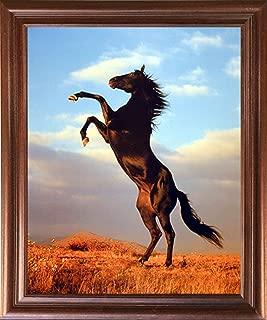 Animal Framed Poster Wall Decor Wild Black Stallion Horse Rearing Mahogany Picture Art Print (18x22)