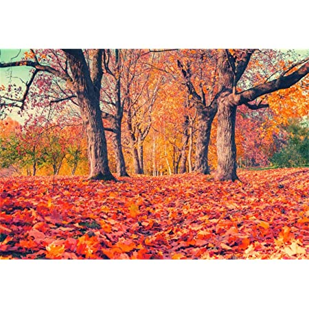 150x220cm 7x5ft Autumn Photography Backdrop Maple Forest Photo Background Red Train Old Rail Backdrop for Photoshoot