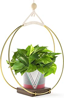 Best succulent hanging wall planter Reviews