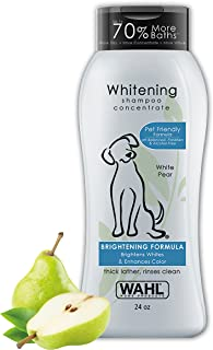 Best poodle white dog Reviews