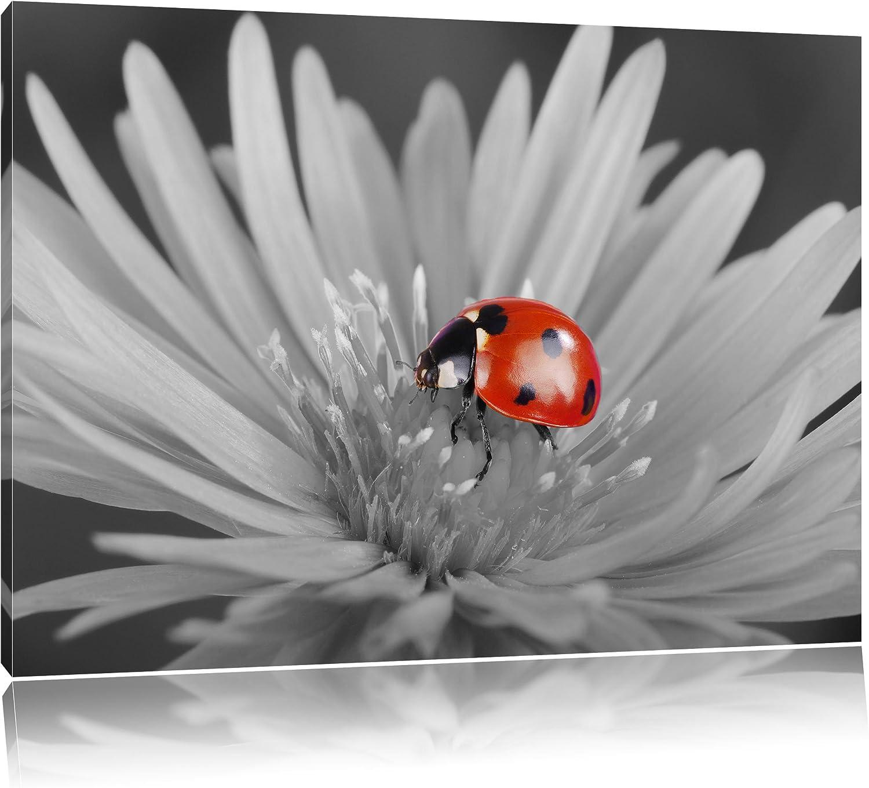 Rot leuchtender leuchtender leuchtender Marienkäfer auf Blüte schwarz weiß Format  120x80 auf Leinwand, XXL riesige Bilder fertig gerahmt mit Keilrahmen, Kunstdruck auf Wandbild mit Rahmen, günstiger als Gemälde oder Ölbild, kein Poster oder Plakat 8b4b9b