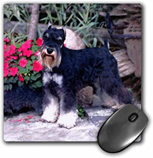 3dRose LLC 8 x 8 x 0.25 Inches Schnauzer Mouse Pad (mp_265_1)
