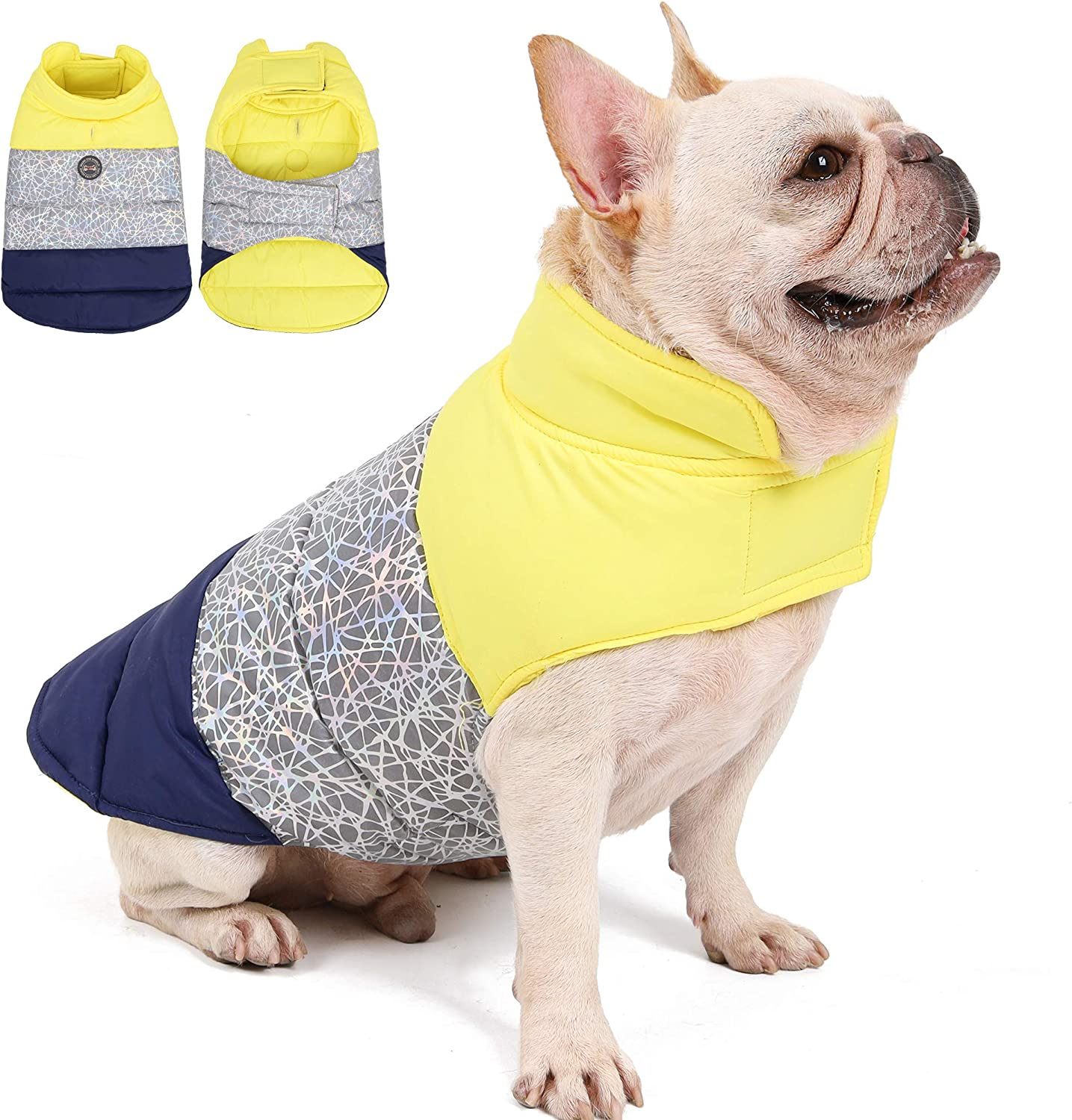 Colorful Dog Directly managed store Winter Jacket Reversible Ranking integrated 1st place for Cold Smal Weather Coat