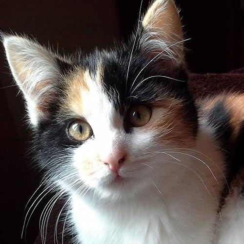 Katzen & Pflanzen - Pflanzen, die für Katzen giftig sind
