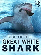Best shark attack documentary Reviews