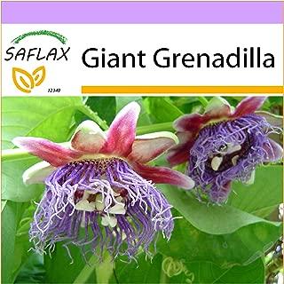 SAFLAX - Giant Grenadilla - 12 Seeds - Passiflora quadrangularis