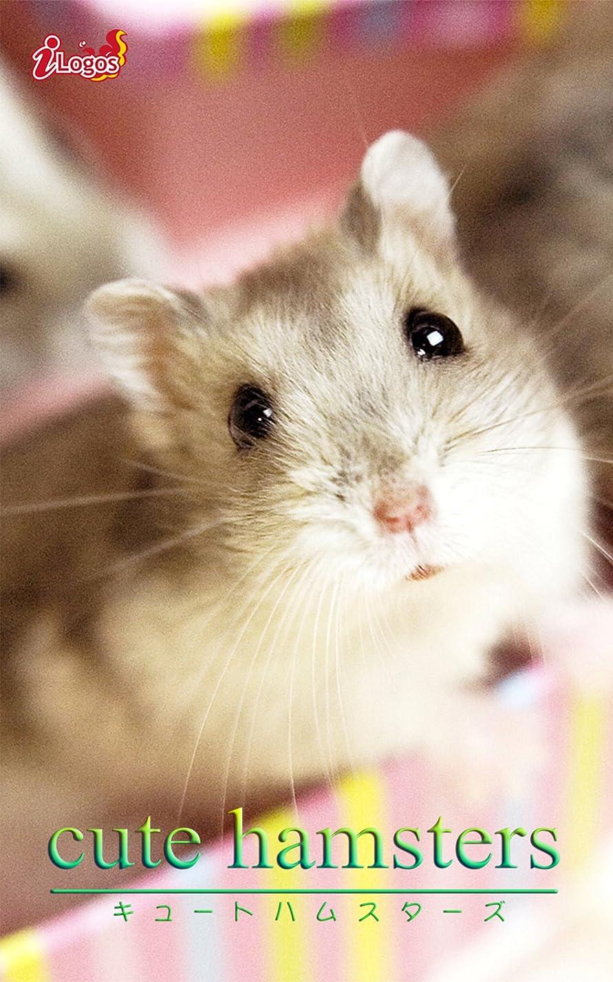 スローガン物理五月cute hamsters01 ジャンガリアンハムスター cute animal