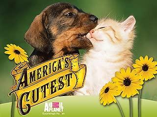 America's Cutest Dog Season 1