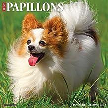 Just Papillons 2021 Wall Calendar (Dog Breed Calendar)