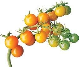 Burpee Sun Gold Tomato Seeds 30 seeds