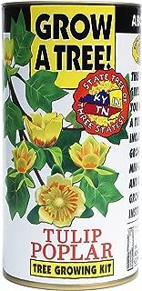Tulip Poplar   Tree Seed Grow Kit   The Jonsteen Company