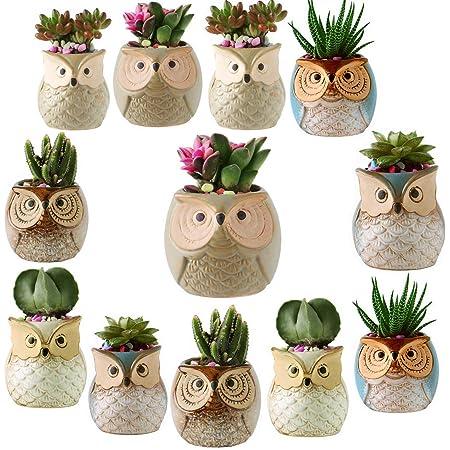 Miniature Pots Thirsty Bird Owls too!