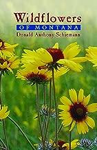 Best montana wildflower identification Reviews