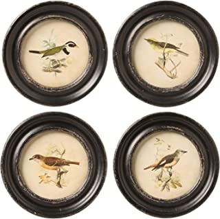 Creative Co-op Framed Bird Prints Set - Vintage Look Retro Bird Wall Art Pictures in Distressed Round Frames