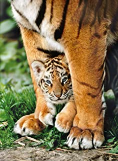 Bengal Tiger Cub Between Its Mother's Legs, Animals Jigsaw Puzzle, Collection, 500 Pieces