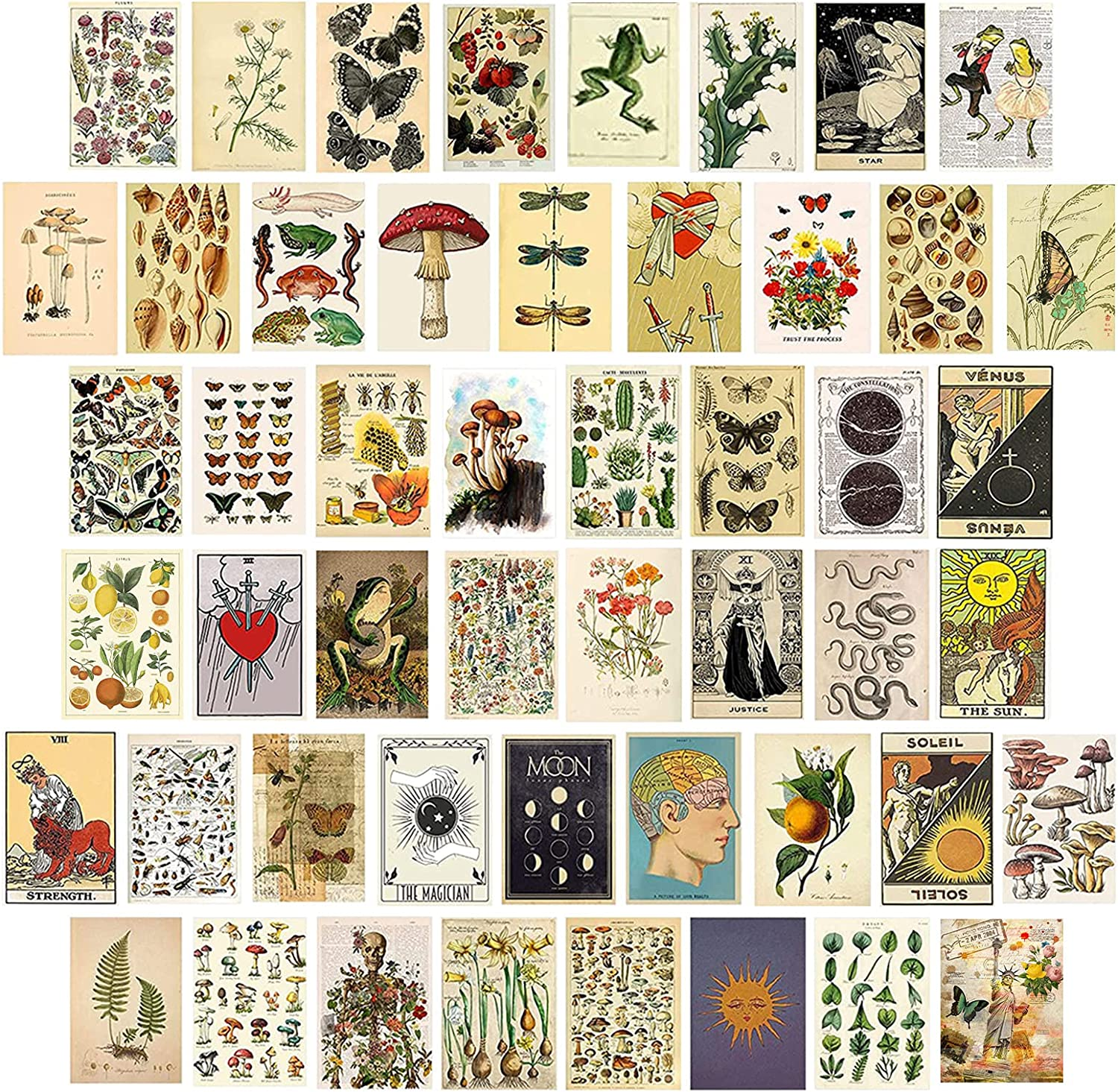 50PCS Wall Collage Kit Vintage Aesthetic Art Print - Trendy Pictures for Teens Girl Boy Dorm Decor, Botanical Photo Collection, Small Posters for Room Decoration