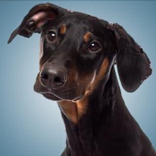 Sonidos De Perros - Sonidos De Perritos
