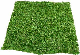 FloristryWarehouse - Lámina de musgo verde (38 cm