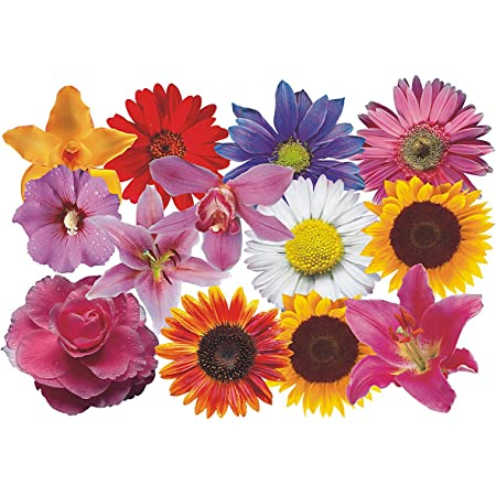 Autoaufkleber Blumendesign Flower Set 08 Mini 36 Stück Küche Haushalt