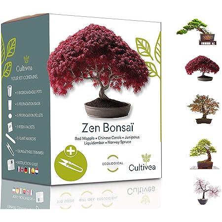 Cultivea Mini - Kit de 5 Bonsái para cultivar - Semillas de calidad - Jardín - Idea de regalo (Arce rojo, Cercis chino, Juniperus, Liquidambar, Pícea de Noruega)