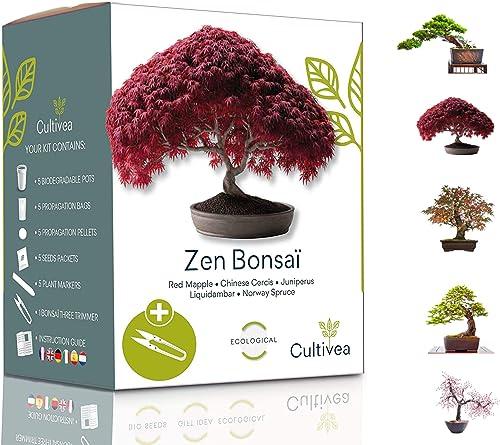Cultivea Mini – Kit Prêt à Pousser 5 Bonsaï – Graines de Qualité - Jardinez et décorez - Idée Cadeau (Red Mapple, Chi...