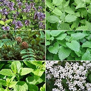 Cat Plant Seed Collection #2-6 Variety Seed Pack of Plants for Your Cat - Catmint, Catnip, Lemon Balm, Licorice, Peppermin...