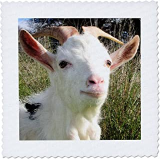 3dRose Farm Animals Goat - Quilt Square, 6 by 6-Inch (qs_21366_2)
