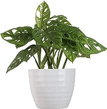 Best big indoor plants online Reviews