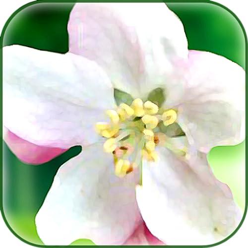 Bach Blüten
