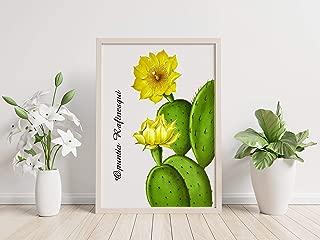 8x10 Opuntia Rafinesqui Cactus Botanical Canvas Print