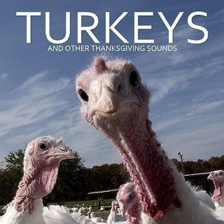 frightened turkey