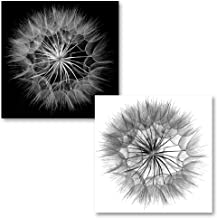 Classic Close-up Black & White Dandelion's Photography; Two 12x12 Posters