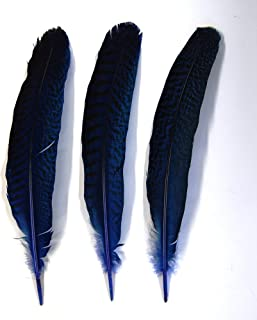 Best paper quilling peacock feather Reviews