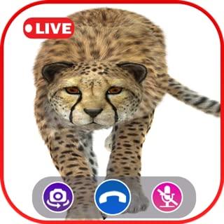 Call Video Cheetah Simulator - Prank Call Apps