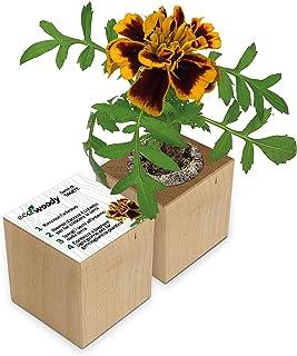 Eco-Woody | Regalo ecologico e sostenibile | Cubo di legno magnetico con semi di Tagete | Kit per la coltivazione facile d...