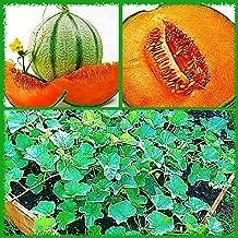 Charentais French Cantaloupe Melon Seeds