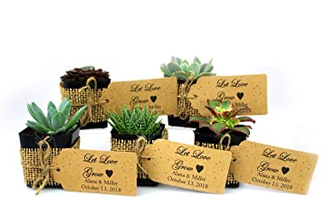 NW Wholesaler - Live Succulent Plant Wedding Party Favors Wrapped in Burlap, Free Personal Card - Fully Assembled (35)