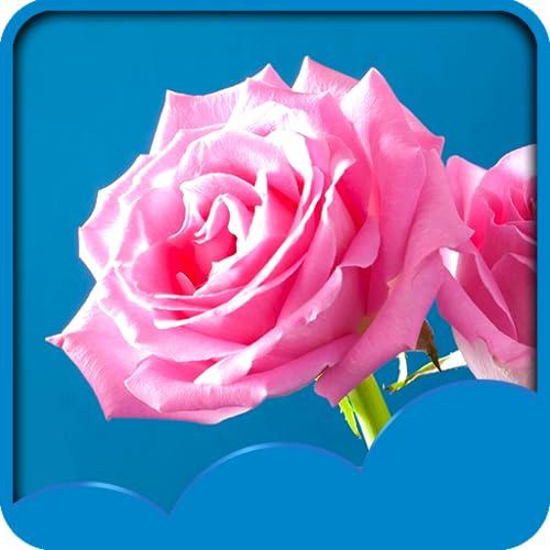 Papéis de Parede de Rose Live