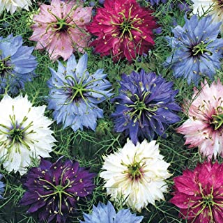 HOT - Love in a Mist, Mix, Love-in-A-Mist, 950 Seeds! GroCo